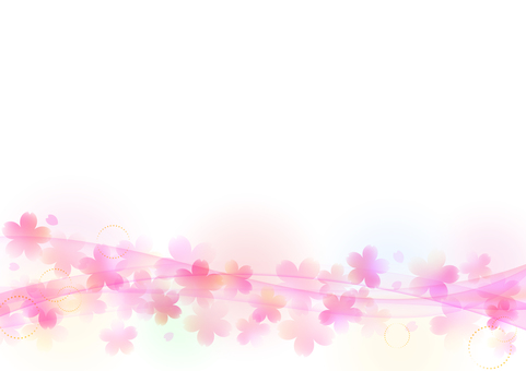 Cherry blossoms 236