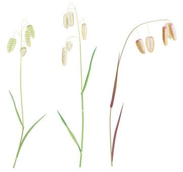 코반소우 / 잡초