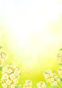 유채 꽃의 봄