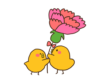 Carnation and chick