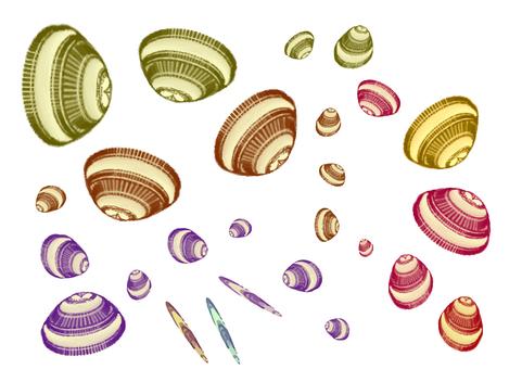 貝のパーツ