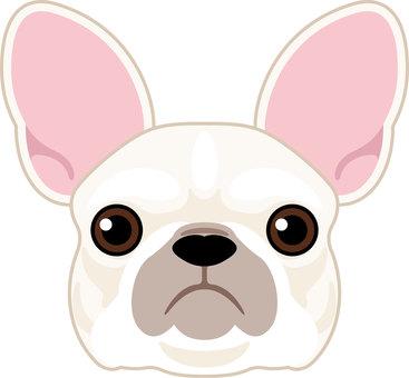 Dog breed species French bulldog