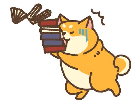 Dojikko Shiba carrying books