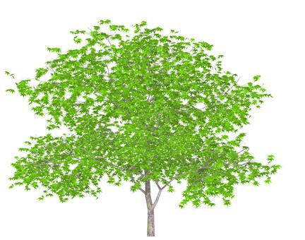tree_004_kaede_02