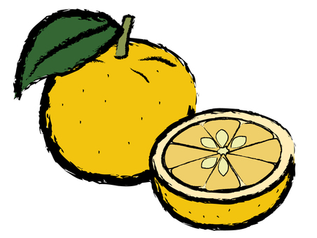 Japanese Style Citrus Yuzu Yuzu Round