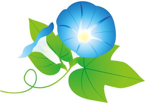 나팔꽃 파란색