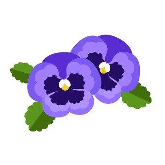 Pansy (purple)