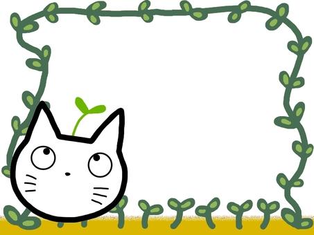 Cat frame bud plant soil