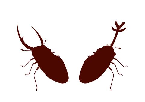 Beetles and stag beetles