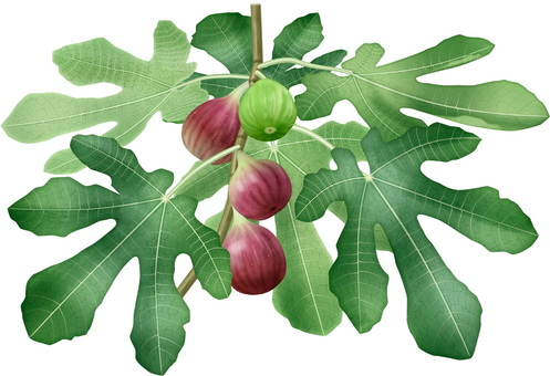 Fig / 1