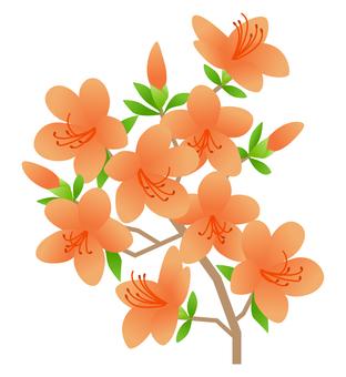 Azalea (Orange)