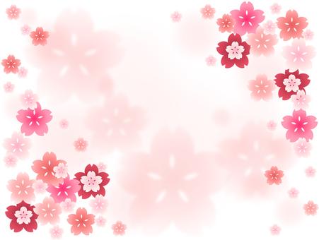 Sakura 27