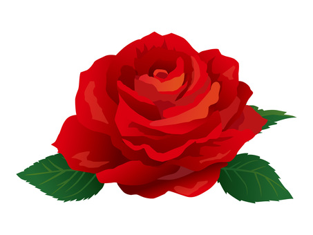 Red Roses 01