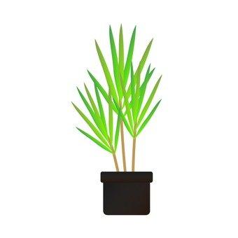 Houseplant - Concinia