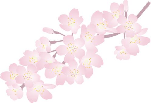 Cut _ Sakura 3