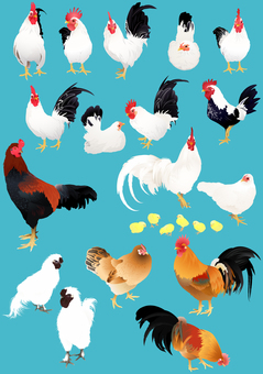 Various chickens 2