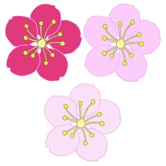 매화 (색 3 패턴)