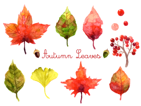 Autumn plant illustration set