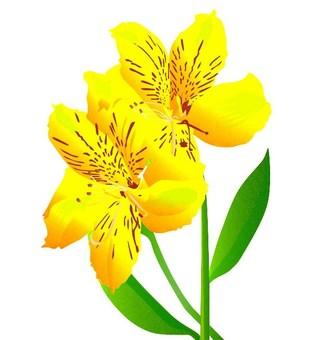 꽃 (알 스트로 메리아)