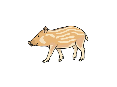 Wild Boar (Uribibou)