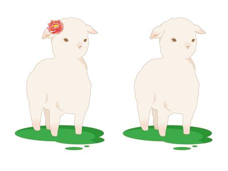 양고기 2