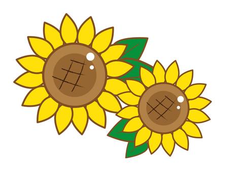 Sunflower multiple