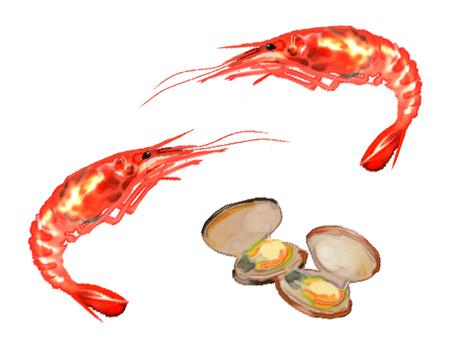 Shrimp clam