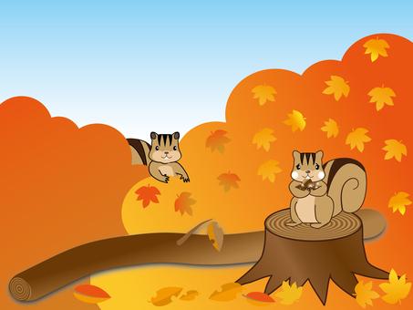 Squirrel fall
