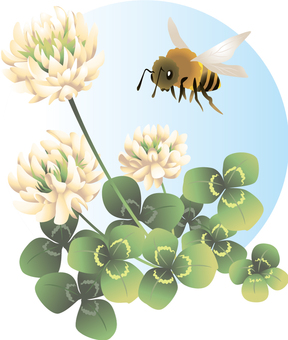 White clover and bee