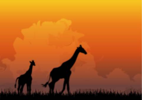 Dusk of Africa and parent and child of giraffe