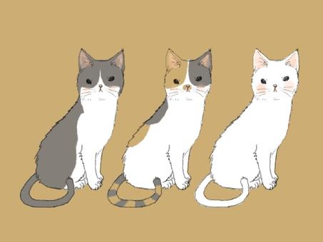 Three cats grumpy
