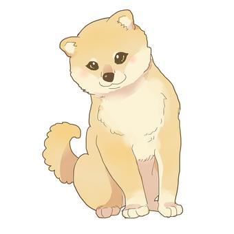 Shiba Inu _ child dog
