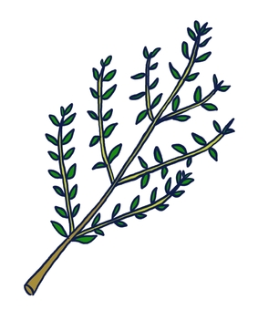 Thyme (herb, spice)