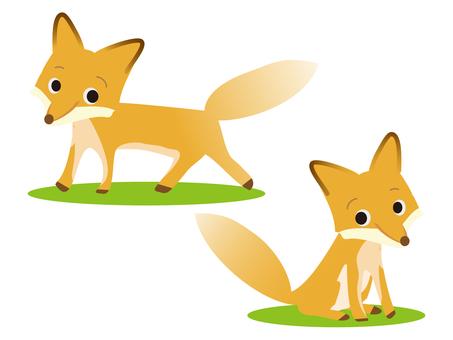 Wildlife fox