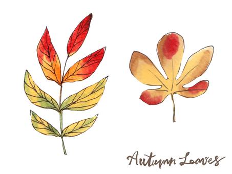 가을 나뭇잎 10