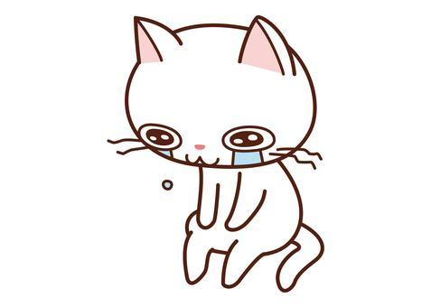 Depressed white cat