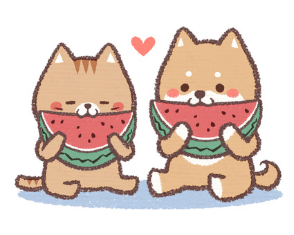 Dog cat watermelon