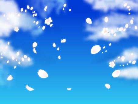 푸른 하늘과 벚꽃 눈보라 02