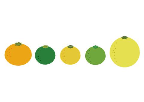 citron citrus 1