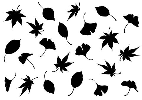 낙엽의 실루엣