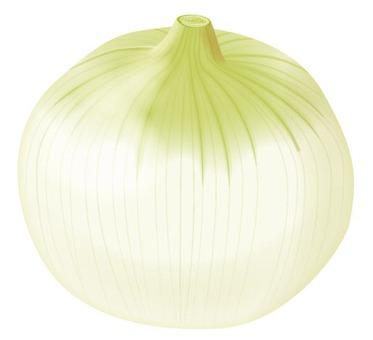 Onion 3 / Vegetable