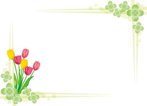 Tulip 2017-05