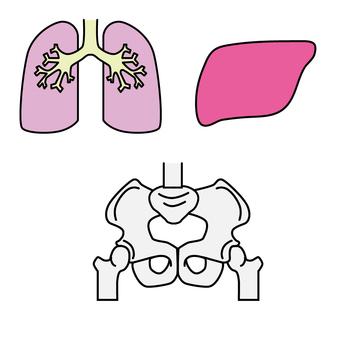 Lung, liver, pelvis
