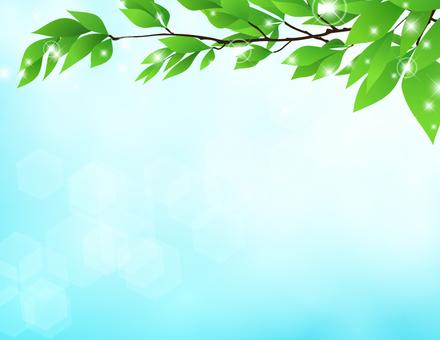 Tree branch _ glittering leaves sky