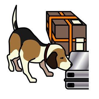 Drug detection dog