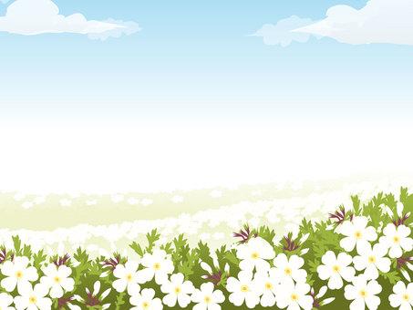 Shiba and blue sky frame