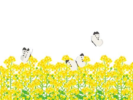 배추 흰나비