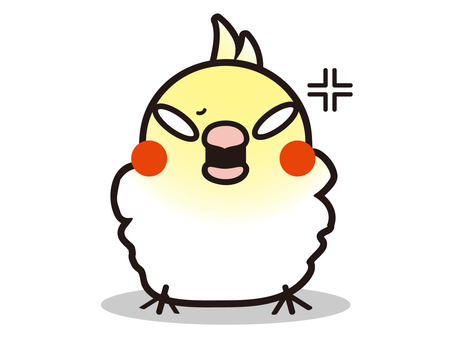Angry cockatiel