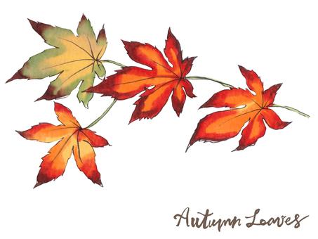 가을 나뭇잎 07