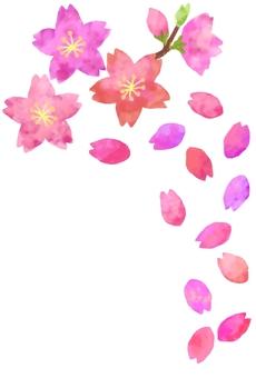 Sakura Hira